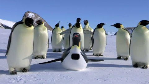 Emperor penguins gather around a penguin-shaped camera robot in Nature's miniseries Spy in the Wild