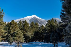 pine trees on snow capped mountain